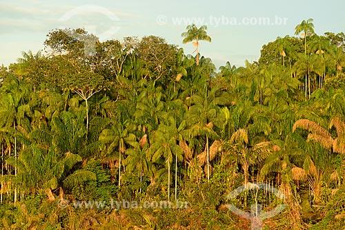 Vista de açaizal às margens do Rio Negro  - Amazonas (AM) - Brasil