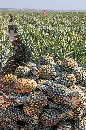 Abacaxis pérola amontoados durante colheita  - Frutal - Minas Gerais (MG) - Brasil