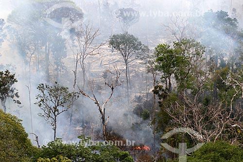 Foto aérea de queimada na Floresta Amazônica  - Manaus - Amazonas (AM) - Brasil