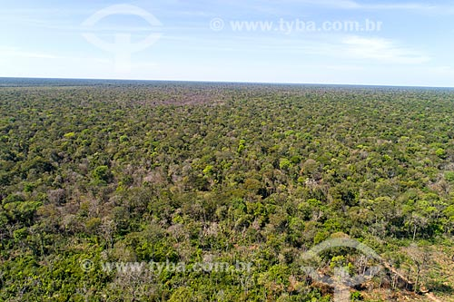Foto feita com drone de vegetação típica do cerrado no Parque Indígena do Xingu  - Querência - Mato Grosso (MT) - Brasil