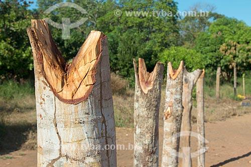 Detalhe de troncos cortados em forma de V para construção de cozinha familiar na aldeia Aiha da tribo Kalapalo - ACRÉSCIMO DE 100% SOBRE O VALOR DE TABELA  - Querência - Mato Grosso (MT) - Brasil