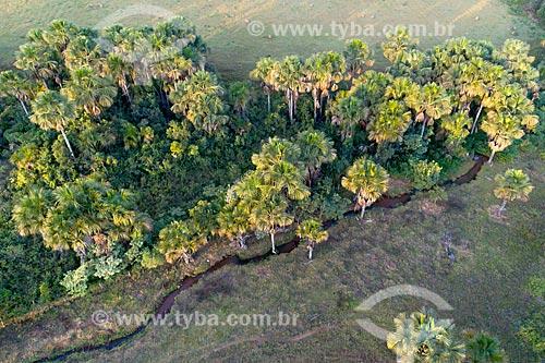 Foto feita com drone de buritizal com pequeno córrego  - Hidrolândia - Goiás (GO) - Brasil