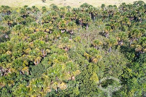 Foto feita com drone de buritizal  - Monte Alegre de Minas - Minas Gerais (MG) - Brasil