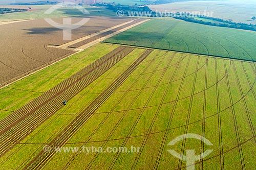 Foto feita com drone de plantação de feijão com milharal à esquerda  - Guaíra - São Paulo (SP) - Brasil