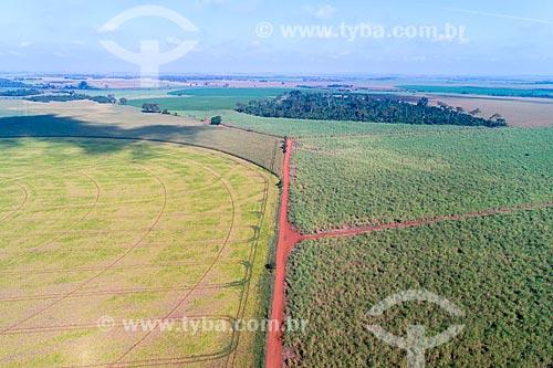 Foto feita com drone de plantação de feijão com canavial à direita  - Guaíra - São Paulo (SP) - Brasil