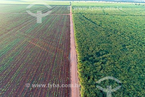 Foto feita com drone de canavial  - Comendador Gomes - Minas Gerais (MG) - Brasil