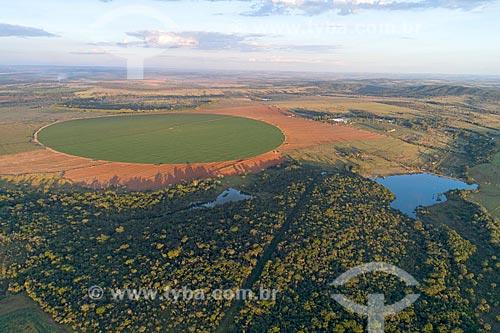 Foto feita com drone de plantação de milho irrigadas com pivô central  - Hidrolândia - Goiás (GO) - Brasil