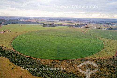 Foto feita com drone de plantação de milho irrigadas com pivô central  - Uberlândia - Minas Gerais (MG) - Brasil