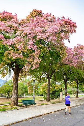 Sapucaia (Lecythis pisonis) florida no Parque da Quinta da Boa Vista  - Rio de Janeiro - Rio de Janeiro (RJ) - Brasil