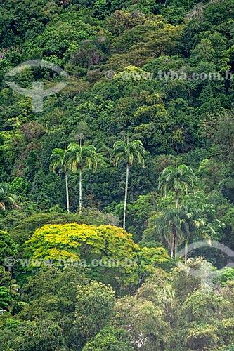 Detalhe de vegetação típica da Mata Atlântica no Parque Nacional da Tijuca  - Rio de Janeiro - Rio de Janeiro (RJ) - Brasil