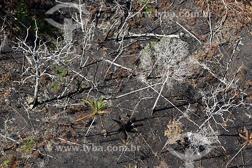 Foto aérea de queimada em vegetação típica da amazônia próximo à cidade de Manacapuru  - Manacapuru - Amazonas (AM) - Brasil