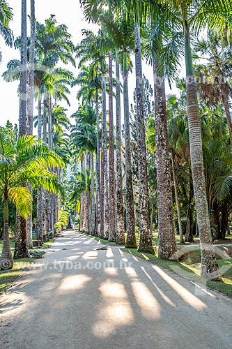 Vista da Alameda das Palmeiras no Jardim Botânico do Rio de Janeiro com o Chafariz das Musas ao fundo  - Rio de Janeiro - Rio de Janeiro (RJ) - Brasil