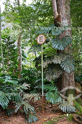 Vista da placa de trânsito indicando estacionamento permitido em meio à vegetação típica da Mata Atlântica no Parque Nacional da Tijuca  - Rio de Janeiro - Rio de Janeiro (RJ) - Brasil
