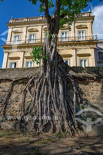 Detalhe de raízes de árvores próximo ao Museu Nacional - antigo Paço de São Cristóvão - no Parque da Quinta da Boa Vista  - Rio de Janeiro - Rio de Janeiro (RJ) - Brasil