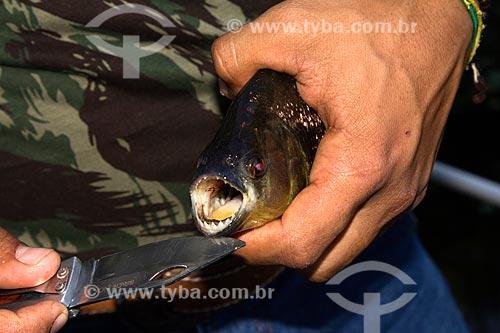 Detalhe de pesca de piranha no corixo São Domingos - afluente do Rio Miranda  - Miranda - Mato Grosso do Sul (MS) - Brasil