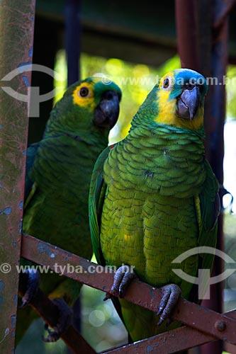 Detalhe de papagaio (Amazona aestiva)  - Miranda - Mato Grosso do Sul (MS) - Brasil