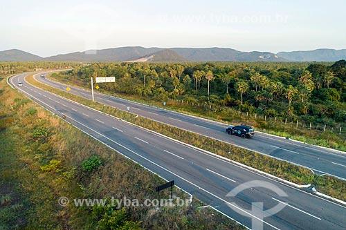 Foto feita com drone de trecho da Rodovia CE-065 com plantação de Carnaúba (Copernicia prunifera)  - Caucaia - Ceará (CE) - Brasil