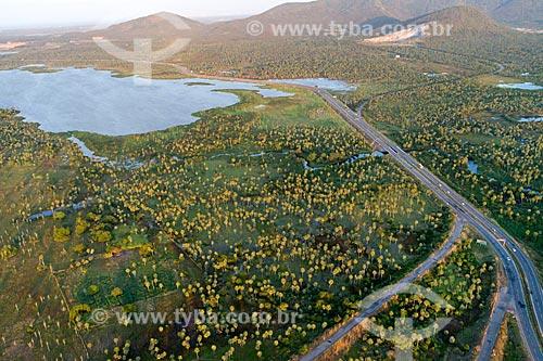 Foto feita com drone de trecho da Rodovia CE-065 e plantação de Carnaúba (Copernicia prunifera) com a Lagoa do Cauípe ao fundo  - Caucaia - Ceará (CE) - Brasil