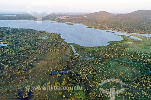 Foto feita com drone de plantação de Carnaúba (Copernicia prunifera) com a Lagoa do Cauípe ao fundo  - Caucaia - Ceará (CE) - Brasil