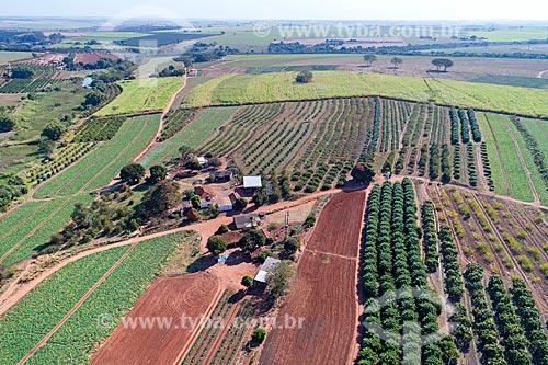 Foto feita com drone de plantação de abóboras - à esquerda - e pomar de manga e carambola - à direita  - Taquaritinga - São Paulo (SP) - Brasil