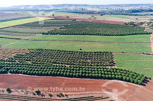 Foto feita com drone de pomar de carambola, plantação de abóbora e pomar de manga ao fundo  - Taquaritinga - São Paulo (SP) - Brasil