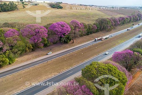 Foto feita com drone de ipês-roxo (Handroanthus impetiginosus) margeando trecho da Rodovia Washington Luís (SP-310)  - Cordeirópolis - São Paulo (SP) - Brasil