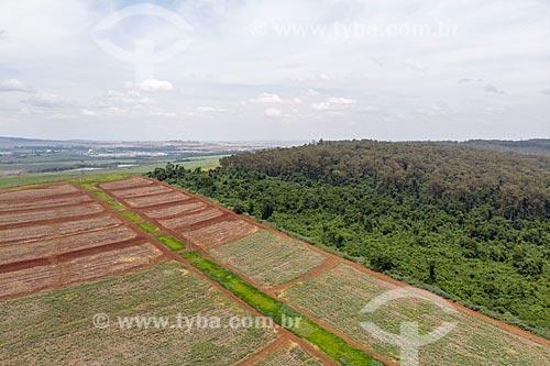 Foto feita com drone dos limites da Floresta Estadual Edmundo Navarro de Andrade (FEENA) - antigo Horto Florestal Municipal Edmundo Navarro de Andrade  - Rio Claro - São Paulo (SP) - Brasil