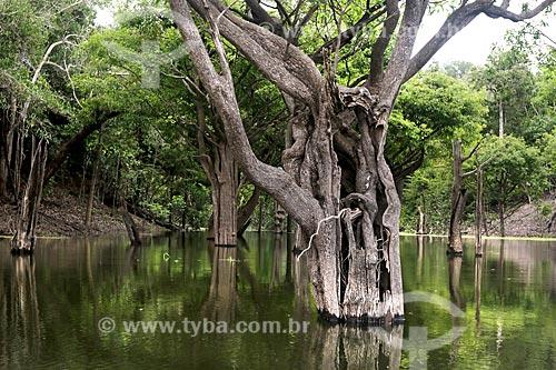 Igapó no Rio Uatumã  - Amazonas (AM) - Brasil