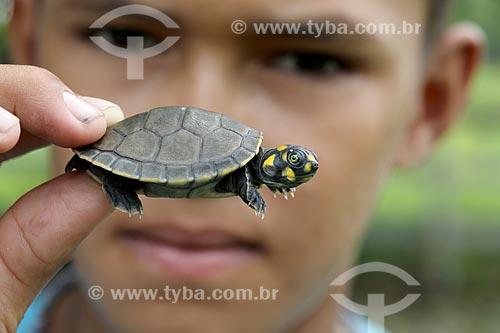 Detalhe de menino ribeirinho segurando filhote de tartaruga-da-amazônia (Podocnemis expansa) no Rio Uatumã  - Amazonas (AM) - Brasil