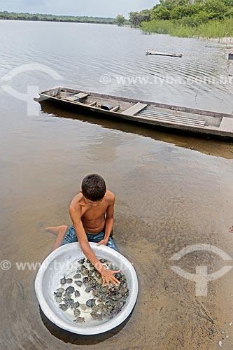 Menino ribeirinho segurando bacia com filhotes de tartaruga-da-amazônia (Podocnemis expansa) às margens do Rio Uatumã  - Amazonas (AM) - Brasil