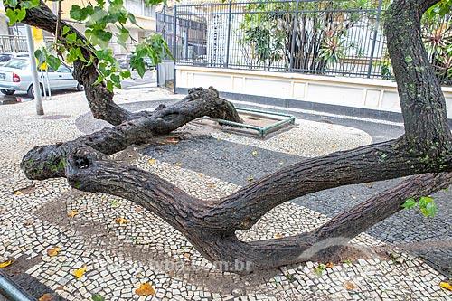 Detalhe de tronco de árvore apoiado na Avenida Atlântica  - Rio de Janeiro - Rio de Janeiro (RJ) - Brasil