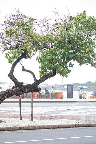 Tronco de árvore apoiado na Avenida Atlântica  - Rio de Janeiro - Rio de Janeiro (RJ) - Brasil