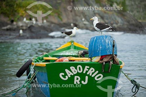 Gaivota na orla da cidade de Cabo Frio  - Cabo Frio - Rio de Janeiro (RJ) - Brasil