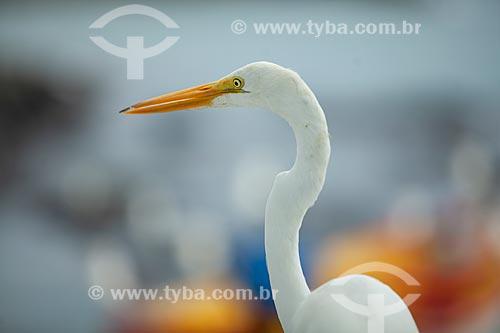 Detalhe de garça-branca-grande (Ardea alba) na orla da cidade de Cabo Frio  - Cabo Frio - Rio de Janeiro (RJ) - Brasil