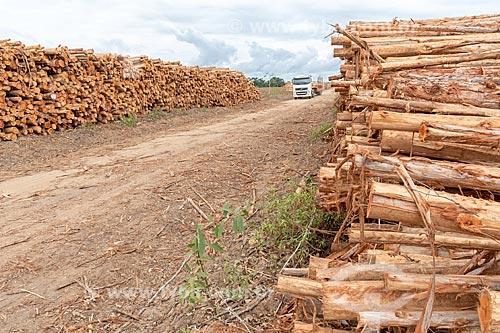 Pilha de eucalipto na plantação da Veracel Celulose  - Eunápolis - Bahia (BA) - Brasil