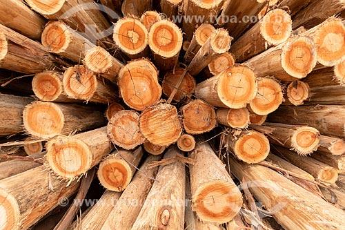 Detalhe de pilha de eucalipto na plantação da Veracel Celulose  - Eunápolis - Bahia (BA) - Brasil