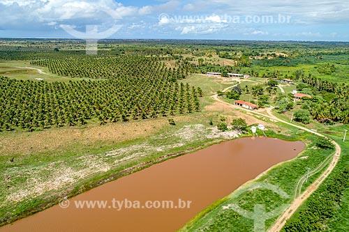 Foto feita com drone de plantação de coco anão irrigada pelo Rio São Francisco  - Pacatuba - Sergipe (SE) - Brasil