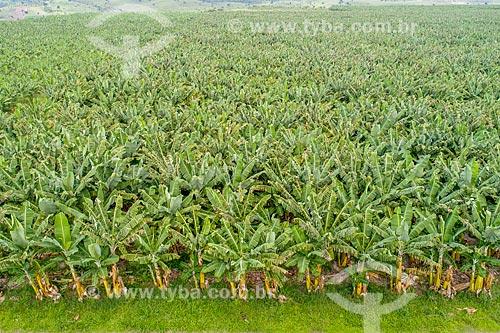 Foto feita com drone de plantação de bananas irrigada pelo Rio São Francisco  - Neópolis - Sergipe (SE) - Brasil