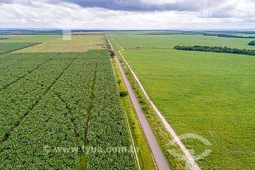Foto feita com drone de plantação de bananas irrigada pelo Rio São Francisco às margens da Rodovia SE-204  - Neópolis - Sergipe (SE) - Brasil