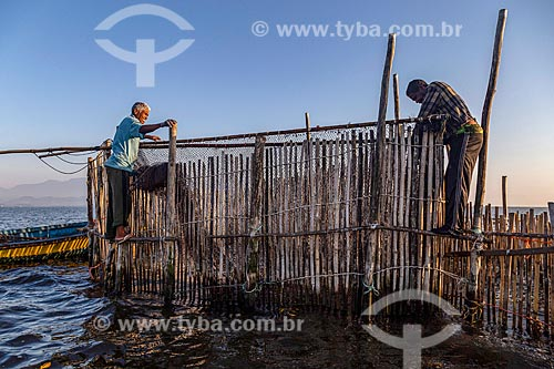 Pescadores montando curral de pesca na Baía de Guanabara durante o amanhecer  - Magé - Rio de Janeiro (RJ) - Brasil