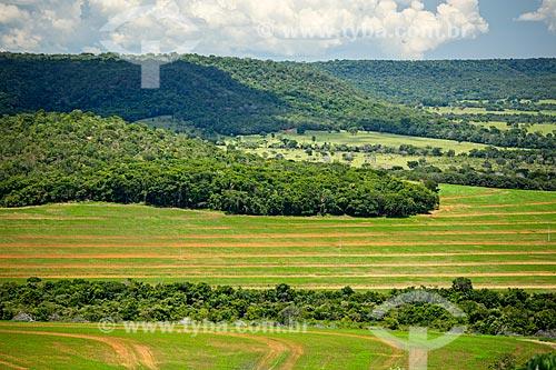 Plantação de Soja com a Serra do Caiapó ao fundo  - Caiapônia - Goiás (GO) - Brasil