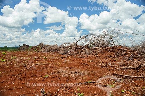 Área com vegetação típica do cerrado desmatada para ampliação de área de plantação de soja  - Caiapônia - Goiás (GO) - Brasil
