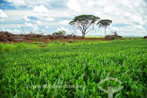 Plantação de Soja com área desmatada para ampliação de área de plantio  - Caiapônia - Goiás (GO) - Brasil