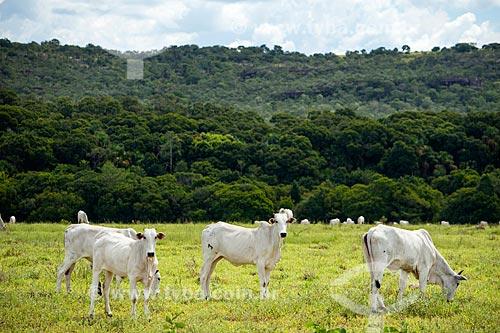 Gado no pasto no cerrado com a Serra do Caiapó ao fundo  - Piranhas - Goiás (GO) - Brasil