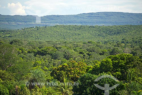 Vegetação típica do cerrado no interior do estado de Goiás  - Baliza - Goiás (GO) - Brasil