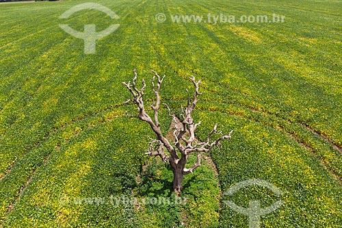 Foto feita com drone de árvore seca no cerrado com plantação de soja ao fundo  - Jataí - Goiás (GO) - Brasil