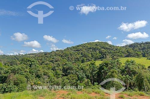 Vegetação típica de mata atlântica na zona rural da cidade de Guarani  - Guarani - Minas Gerais (MG) - Brasil