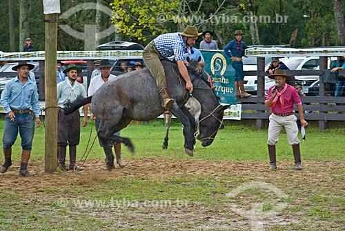 Ginete montando cavalo durante rodeio de gineteada  - Canela - Rio Grande do Sul (RS) - Brasil