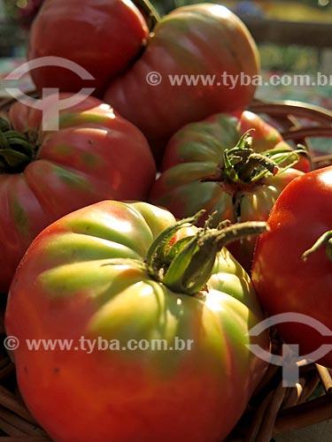 Detalhe de tomates  - Canela - Rio Grande do Sul (RS) - Brasil