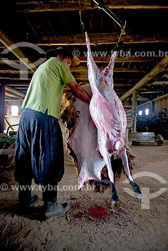 Gaúcho carneando ovelha  - São Francisco de Paula - Rio Grande do Sul (RS) - Brasil
